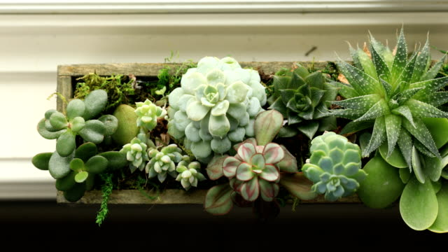 succulent plants - succulent plant stock videos & royalty-free footage