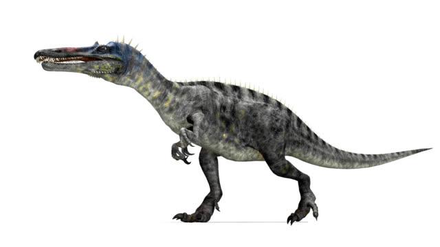 suchomimus dinosaur walking - 恐竜点の映像素材/bロール