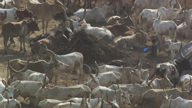 vídeos de stock, filmes e b-roll de sudan : herding families - sudão