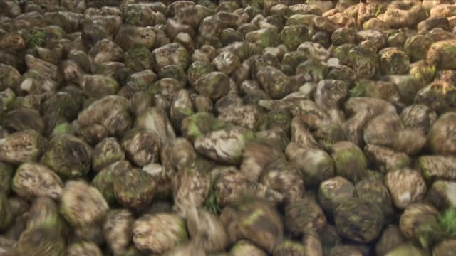 sugar beet being processed in a factory - beet stock videos & royalty-free footage