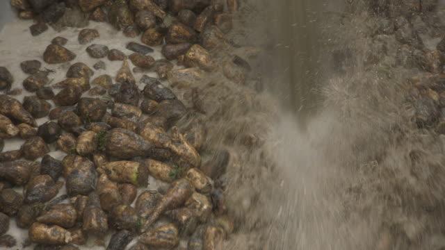sugar beet being washed in sugar refinery, uk - hygiene stock videos & royalty-free footage