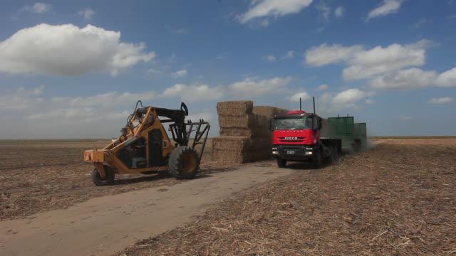 sugar cane bales in a sugar field, alagoas, brazil - hay truck stock videos & royalty-free footage