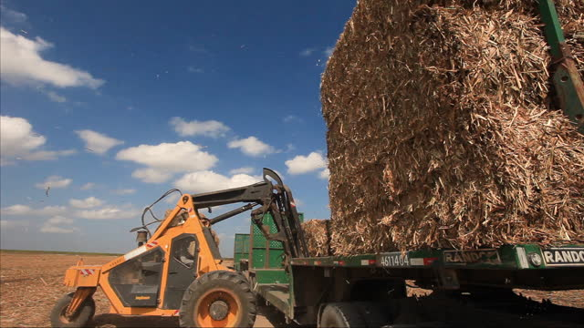 sugar cane bales on field, after sugar cane harvesting, alagoas, brazil - fuel and power generation stock-videos und b-roll-filmmaterial