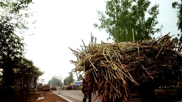 Zuckerrohr Einkaufswagen Reiten