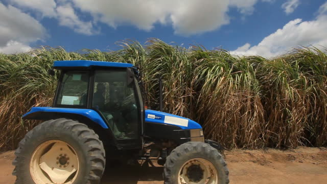 sugar cane field, alagoas, brazil - sugar cane stock videos and b-roll footage