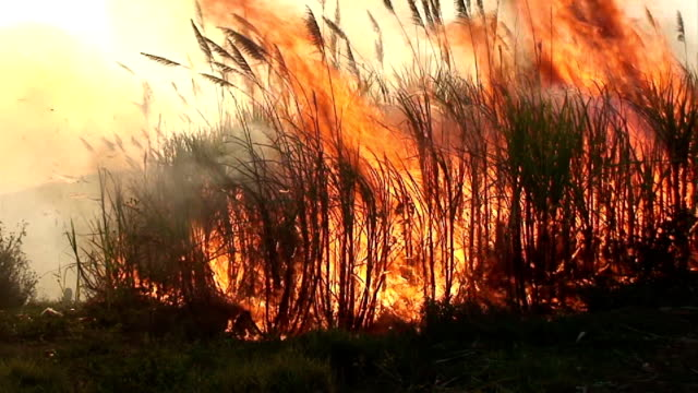 sugar cane fire hd 1080i - forest fire stock videos and b-roll footage