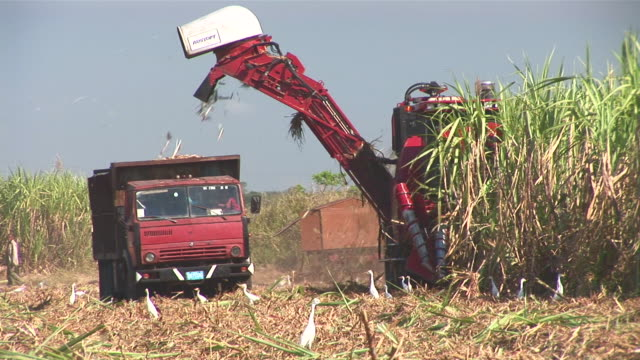 ms pan sugar cane harvesting / holguin, cuba - sugar cane stock videos and b-roll footage