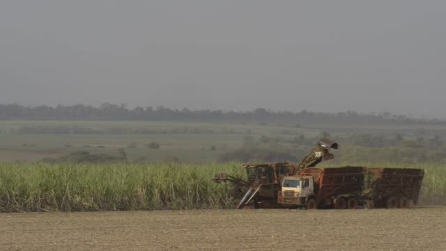 sugar cane is harvested at  a farm about 30 minutes from biosevs santa elisas mill sertaozinho state of sao paulo brazil on thursday september 24th... - sugar cane stock videos & royalty-free footage