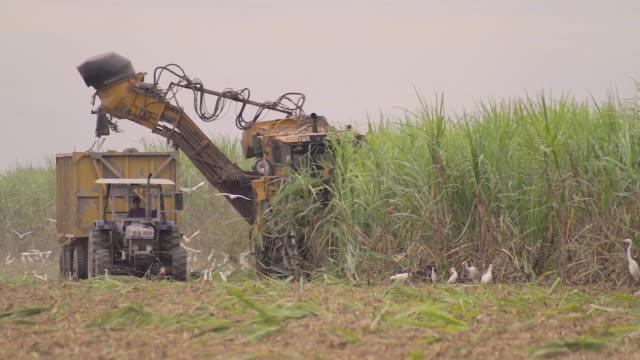 sugar cane machine - sugar cane stock videos & royalty-free footage