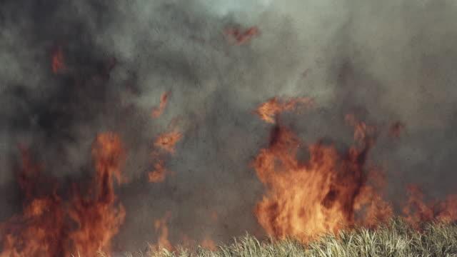 sugar cane plantation fire. - burning stock videos & royalty-free footage