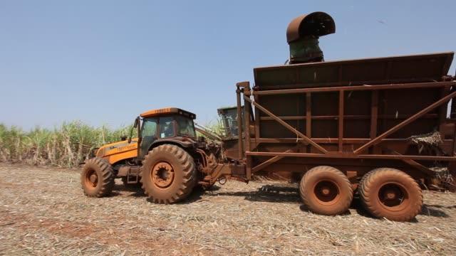 vídeos de stock, filmes e b-roll de sugar cane plantation - sugar cane