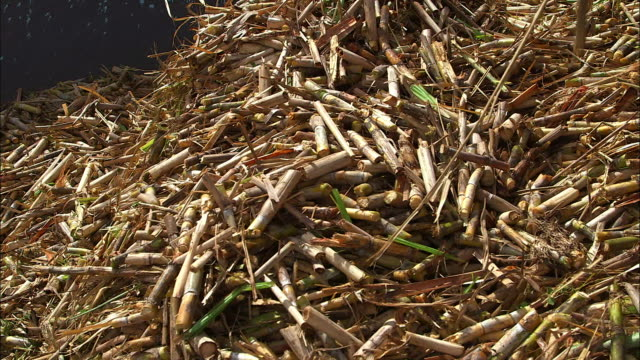 sugar canes piled up in barbados - hay stock videos and b-roll footage