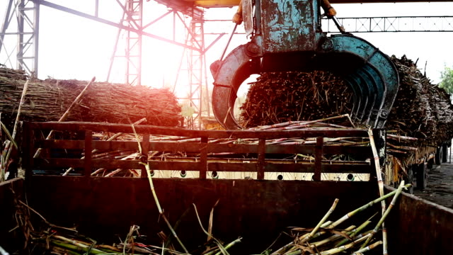 sugar mill - sugar stock videos and b-roll footage