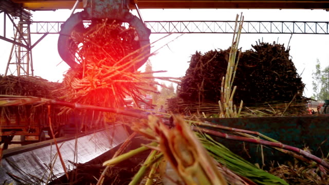 sugar mill - sugar cane stock videos and b-roll footage