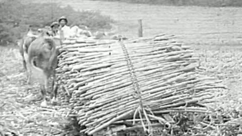 sugar plantation and mill - south america stock-videos und b-roll-filmmaterial