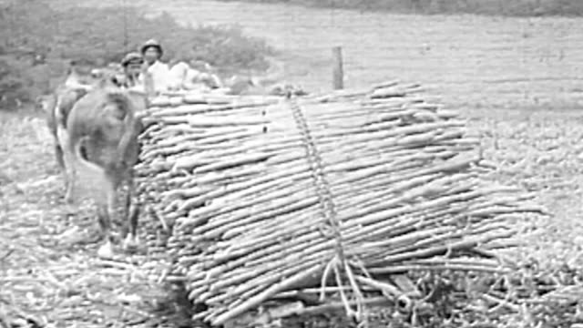sugar plantation and mill - history stock videos & royalty-free footage