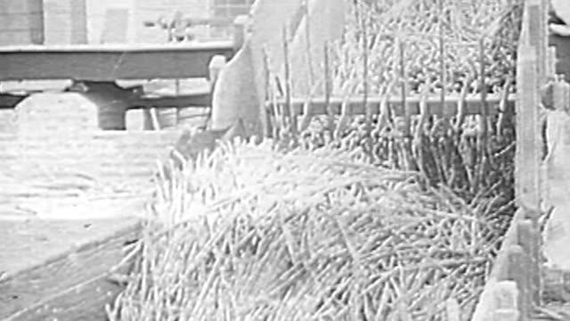 vídeos de stock, filmes e b-roll de sugar plantation and mill - 1930