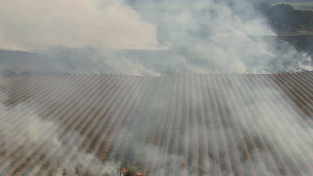 sugarcane fields burn in louisiana. - baton rouge stock-videos und b-roll-filmmaterial
