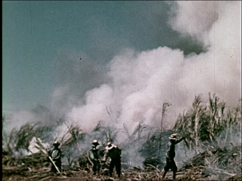 vidéos et rushes de 1959 sugarcane industry in hawaii - sugar cane