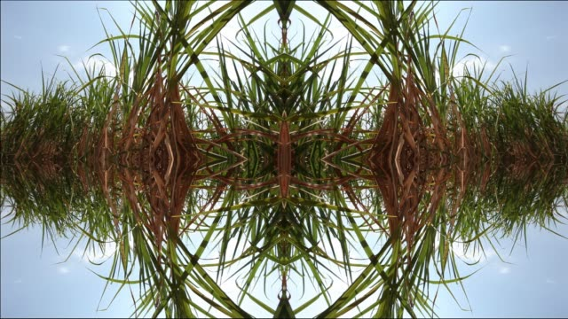 sugarcane plantation in sao paulo country side, brazil (abstract, composite image) - mandala stock videos & royalty-free footage