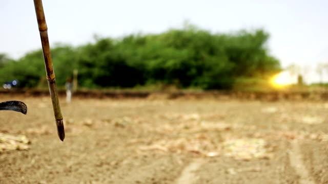 vídeos de stock e filmes b-roll de sugarcane - cortar atividade