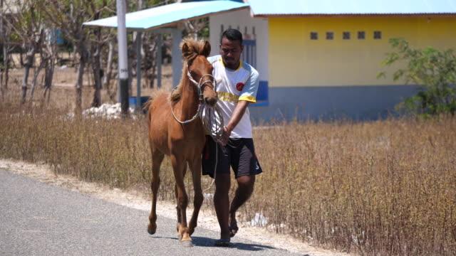 sumba horses. - transportation event stock videos & royalty-free footage