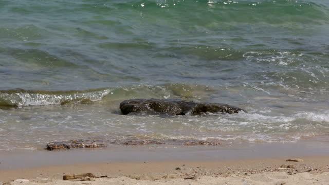 vídeos y material grabado en eventos de stock de verano en la playa - estilo de música
