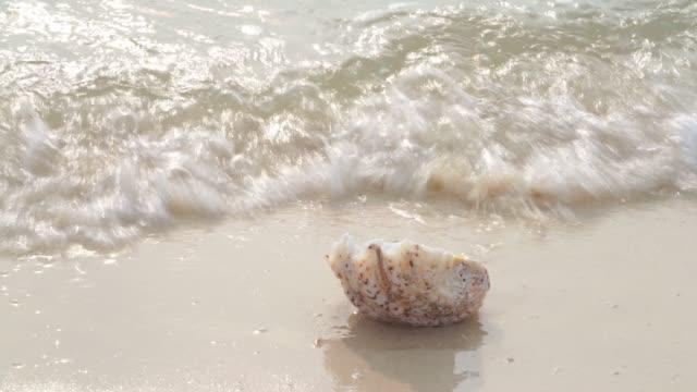 summer beach - shell on sandy beach - conch stock videos & royalty-free footage
