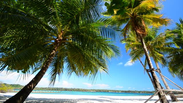 vídeos y material grabado en eventos de stock de playa de verano con árbol de palma de coco - full hd format