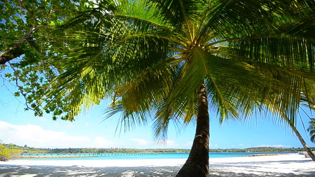 vídeos y material grabado en eventos de stock de verano playa con árboles de palma de coco - full hd format