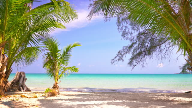 summer beach with coconut palm trees - coconut palm tree stock videos & royalty-free footage