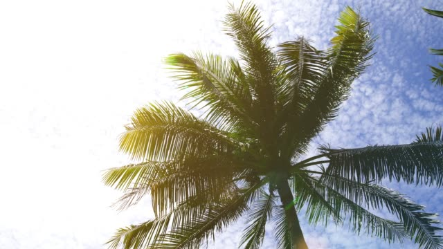 summer beach with coconut palm trees - palm tree stock videos & royalty-free footage