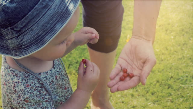 summer berries - scandinavian culture stock videos and b-roll footage