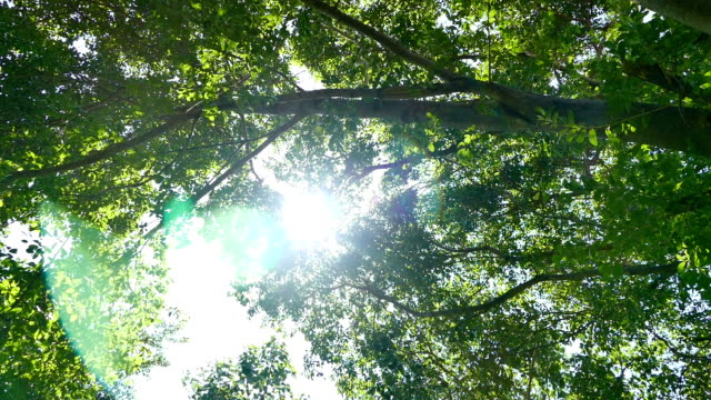summer deciduous forest - atlanta georgia stock videos & royalty-free footage