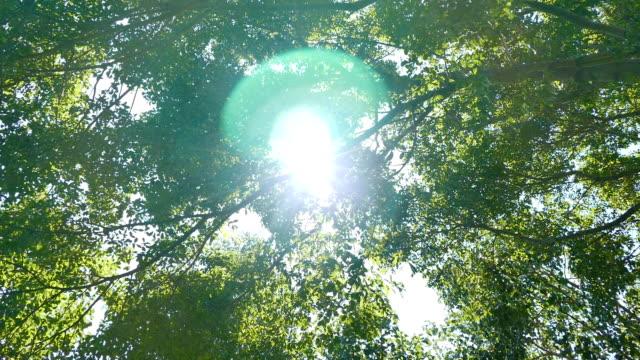 vidéos et rushes de été la forêt de feuillus - vue en contre plongée verticale