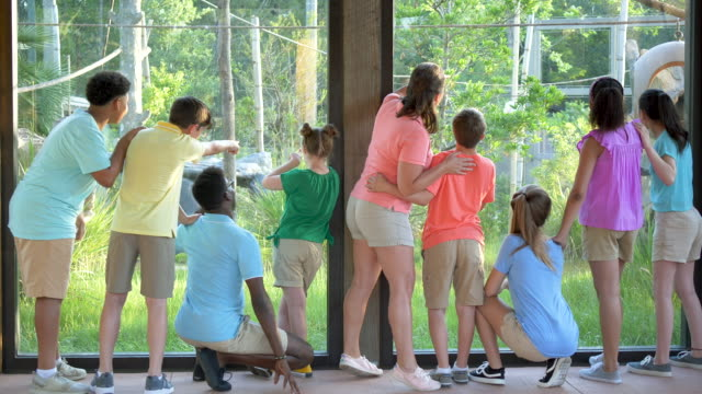 summer field trip to zoo, including children with downs - summer camp helper stock videos & royalty-free footage
