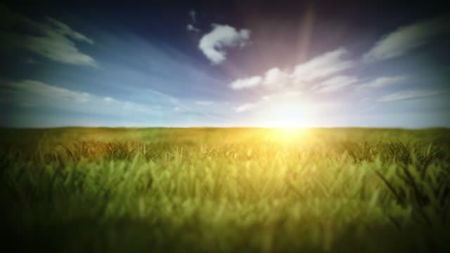 summer field video - sundog stock videos & royalty-free footage