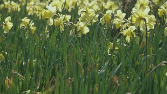 summer flower in garden,Northern Ireland