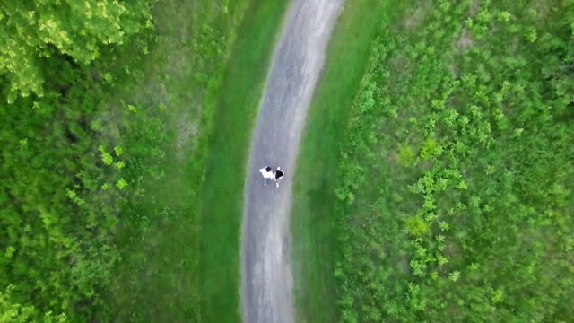 summer forest aerial view  in ottawa ,canada - pinaceae stock videos & royalty-free footage