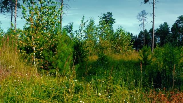 Sommer-Waldrand