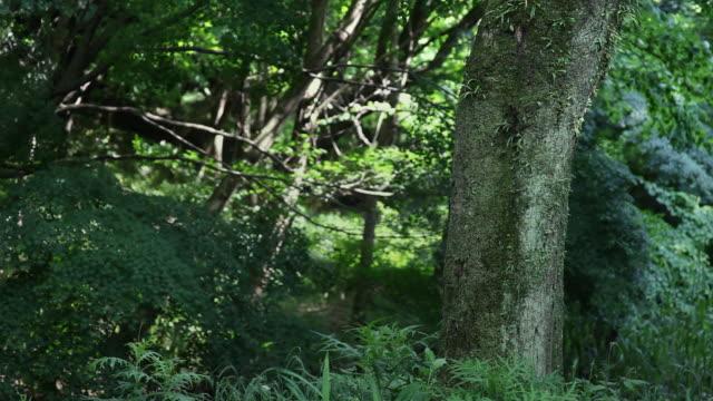 summer forest in japan - 鎖定觀看位置 個影片檔及 b 捲影像