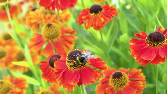 summer garden scene of a bee and flowers - johnfscott stock videos & royalty-free footage