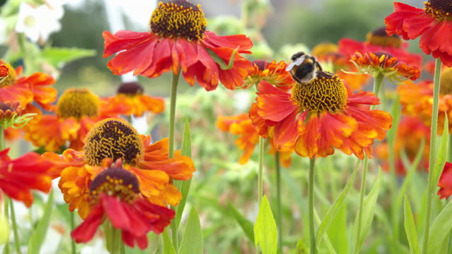 summer garden scene with a bee and flowers - johnfscott stock videos & royalty-free footage