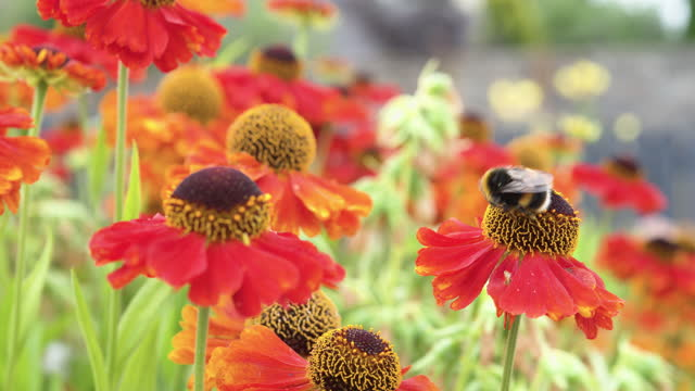 summer garden scene with a bee collecting pollen - johnfscott stock videos & royalty-free footage