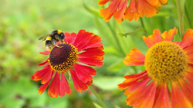 summer garden scene with a bumblebee on a flower - johnfscott stock videos & royalty-free footage