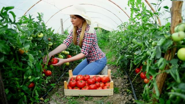 Zomer tuinieren in de serre
