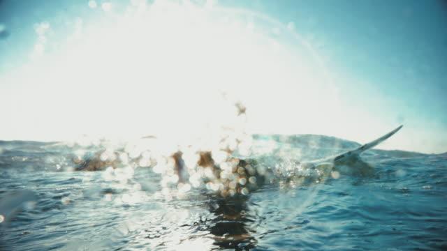 vídeos de stock, filmes e b-roll de o verão está aqui: meninas surfistas em ação - diving suit