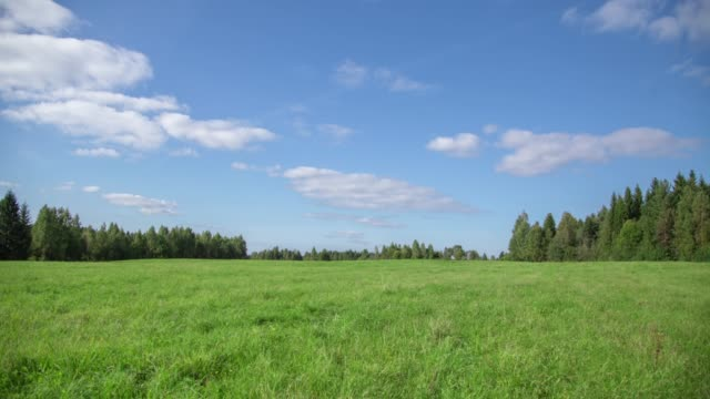 summer landscape with field of grass,blue sky timelapse. - pasture stock videos & royalty-free footage
