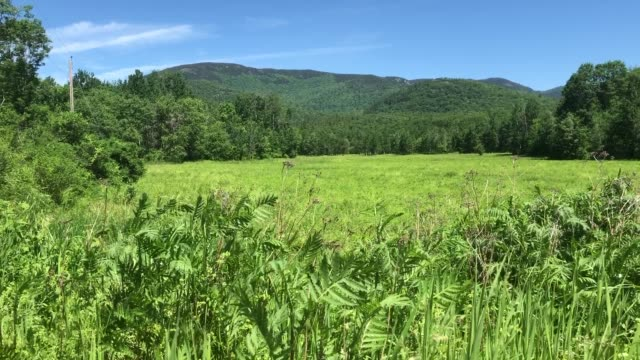summer meadow in the white mountains near shelburne, new hampshire - appalachian mountains stock videos & royalty-free footage