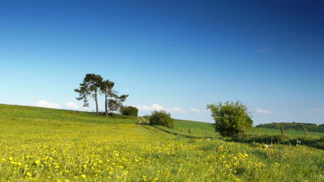 crane up: summer meadow - crane shot stock videos & royalty-free footage